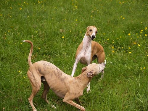 Coco und Nisha in der Windau