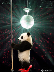 Pole Dancing Panda