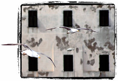 Flying Over a Domino Sheet Wall (Firenzesca) Tags: italy white black window italia dof bokeh gull finestra tuscany frame toscana bianco nero gabbiano outofbounds musictomyeyes oob piombino mywinners
