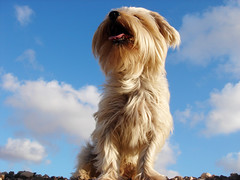 King of the sky !! (Majocesa) Tags: sky dog pet jill perro explore coco cielo happybirthday mascota felizcumpleaos theunforgettablepictures a3b betterthangood majocesa