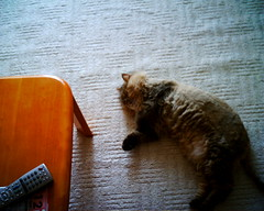 【写真】VQ1005で撮影した室内(ダレる猫)