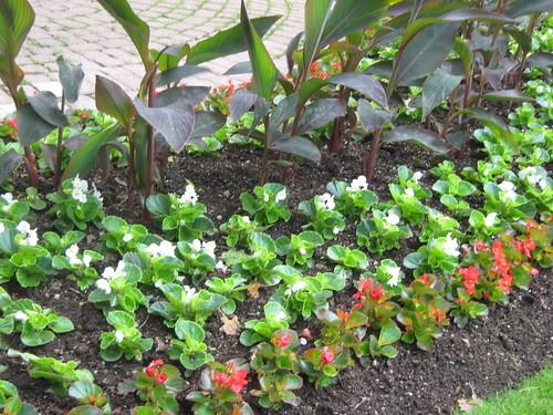 summer flowers in riverside 019