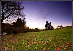 Fallen Leaves (Chris Gin) Tags: park autumn newzealand leaves cornwall auckland nz ndfilter gndfilter neutraldensity graduatedfilter