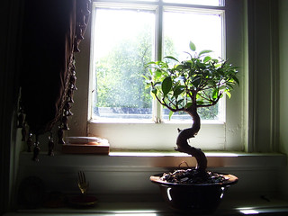 bonsai on da sill.