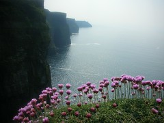 my heart (brendan ) Tags: flowers sea cliff flower nature landscape rebel landscapes cliffs atlantic oceans cliffsofmoher abu atlanticocean moher seas rebels ab cliffsofmoherireland clareireland livelearnlove rebelsab mustseeplaces mustseedestinations cliffsofmohersunrise cliffsofmoherflowers cliffsofmohersunset