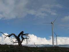 20080727_31_Snowtown (Bush Philosopher - Dave Clarke) Tags: tree australia sa southaustralia turbine windfarm windpower windenergy renewableenergy snowtown sustainableenergy windispower