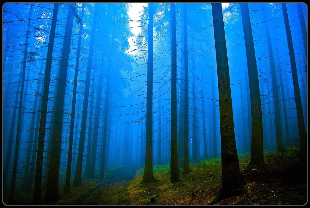 blauer Nebelweg - blue fog