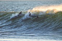 some dolphins (laatideon) Tags: sunrise surf waves dolphins etcetc laatideon deonlategan