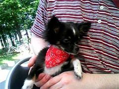 Kenji03's puppy
