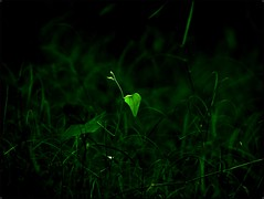 Love .    Light .   Life . (Adarsh Padegal) Tags: light india green love leaves dof heart depthoffield backlit hyderabad andhra adarsh pca hpc prema telugu andhrapradesh  shamirpet krishlikesit adarshpadegal lovelightlife  hydeprabadphotographyclub