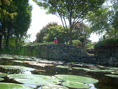 2008-08-30-dscn5528 (martin_kalfatovic) Tags: arlington minigolf lilies 2008 lilypond uptonhills