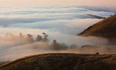 now you see it... (m krause) Tags: california statepark marin mttam coastline canondigitalrebel ridgeline krause xsi mttamalpais goldengatenationalrecreationarea fogbelt ggrna megankrause panoramichighway mkrause mywinners mywinner abigfave canonxsi earthlifeamazement megankrausephotography megankrausecom wwwmegankrausecom