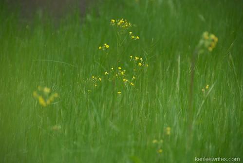 Ofuna Botannical Gardens  045