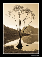 Buttermere Birch. (numanoid69) Tags: uk england lake mountains tree sepia reflections landscape nationalpark lakedistrict cumbria fells buttermere nikond300 prideofengland