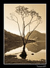 Buttermere Birch. (Julian Scott Photography) Tags: uk england lake mountains tree sepia reflections landscape nationalpark lakedistrict cumbria fells buttermere nikond300 prideofengland
