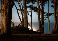 lands end II (at night) (m krause) Tags: sf sanfrancisco california ca nightphotography urban moon nature night landsend canondigitalrebel montereycypress harvestmoon xsi megankrause mkrause sutrocliffs canonxsi megankrausephotography megankrausecom wwwmegankrausecom