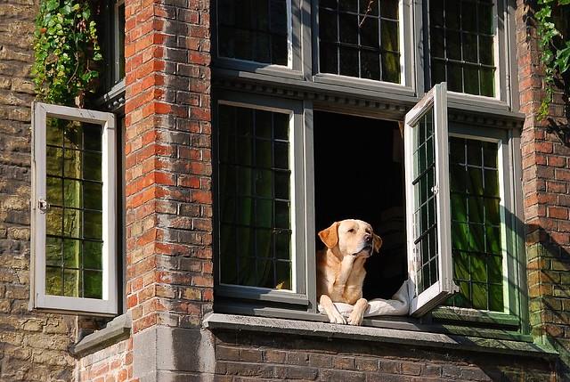 A dog named Vermeer