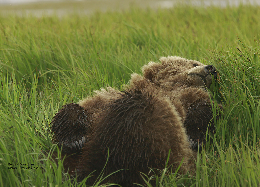 Sleeping Bear Q2E3593