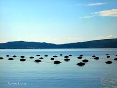 mussel farms (Carpe Feline) Tags: mountains coast europe nets adriatic montenegro kotor mountainous fijord carpefeline musselfarming balkins seaframing