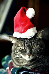 Amelie wishes you a merry christmas (ninakupenda81) Tags: christmas hat cat chat gatto cappello