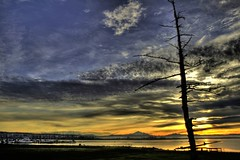 Semiahmoo Dawn (Andrew E. Larsen) Tags: sky tree water clouds sunrise dawn golden alone andrew calm best serene digitalrebelxt soletree anawesomeshot papalars andrewelarsen