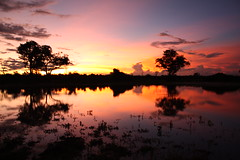 Sunset in Botswana (Jaamzp) Tags: trip sunset orange tree pond december safari botswana lebala pfogold pfosilver pfohalloffame 6monthtrip