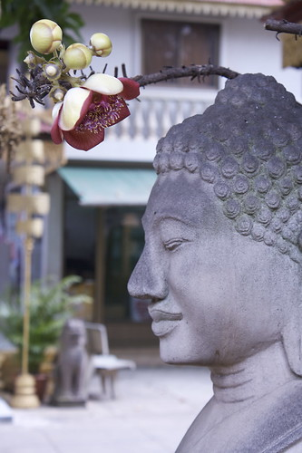 Flower and Buddha