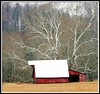 Old Sycamore Tree and Red Barn (chippewabear) Tags: tree barn fdsflickrtoys indiana sycamore redbarn paragon sycamoretree bej abigfave morganco goldstaraward