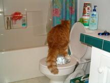 toilet training cat