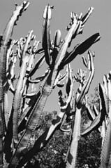zoobwcactus