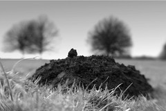 blenheim landscape #4: mole hill (ludwig van standard lamp) Tags: bw lensbaby landscape creativecommons blenheim woodstock