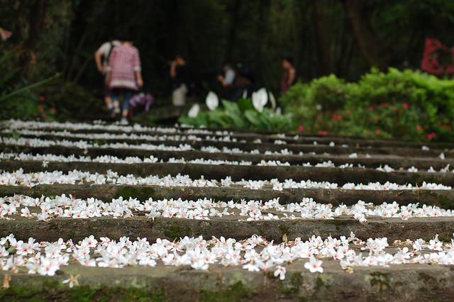 2011.05.08 桃園 / 大溪 / 十一指古道