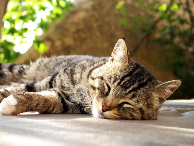 Uchisar民宿的貓