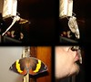 Cherry a borboleta (Rafinha Shinta1) Tags: verde planta praia café animal água cherry mar do maria natureza flor bonito chuva paisagem céu vermelho fruta abelha dourado amarelo libelula peixe inseto ave borboleta cachorro basset macaco quarto nublado prédio sapo oriental decoração lagarto narigudo filhote libélula mosca bolacha horizonte siri ondas coqueiro joaninha papagaio lata arara prata aranha canário grão taturana bugio carangueijo gafanhoto gaiola besouro bichinho pólem mariafedida tesourinha vira enguia fedida siriri
