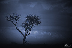 Lone! (bharathiclick) Tags: blue cloud love published good bad agency click blone organisation institution hosur flich bharathi publishinghouse d80 treeb transmittedviaemailsorotherwise printedorsharedinanyphysicalorelectronicformeitherinpartorinwholewithouttheexplicitwrittenconsentofthecopyrightownerlegalactionwillbeinitiatedagainstanyindividual etcwhoviolatethecopyrightlawsincludingbutnotlimitedtothosementionedhereandusetheimageforanycommercialnoncommercialpurposes bharathiallrightsreservedthisimageshouldnotbereproduced