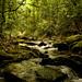 Bradley Creek Photo 8