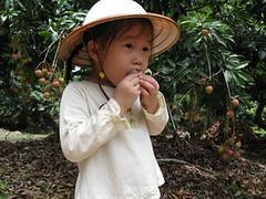 20080601-yo吃荔枝-15