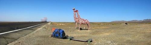 Giraffes on National Highway 312 between Shanshan and Sandaolin, Xinjiang, China