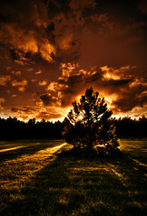 The Tree of Wrath (Villi.Ingi) Tags: sunset red orange hot tree nature forest canon evening iceland rage heat wrath hdr heimrk 40d platinumheartaward ljomicomp10