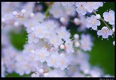 Quiet flower on summer air (Marie Eve K.A. (Away)) Tags: summer plants white flower macro green nature forest canon flora quiet dof bokeh 100mm botanic  floret       hbw  bej abigfave platinumphoto diamondclassphotographer flickrdiamond