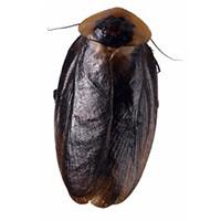gokiburi (3doel82) Tags: fish bird animals insect gambar koleksi ikan belajar burung binatang carnivora serangga mamalia amphibi