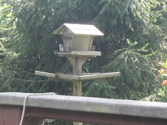 Tufted Titmouse (TER-OR) Tags: birdfeeder tuftedtitmouse
