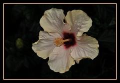 cadrageDSC_2262_DxO (claudedelrieu21) Tags: macro nature fleur amazing fabulous finest natures pictureperfect damncool smorgasbord masterclass miltoniopsis naturesfinest blueribbonwinner encarnado supershot amazingtalent amazingshot flowerotica flickrsbest fantasticflower fineartphotos masterphotos abigfave nikoniste platinumphoto anawesomeshot impressedbeauty flickrbest ultimateshot flickrplatinum ultimatshot superbmasterpiece naturefinest infinestyle diamondclassphotographer flickrdiamond ysplix ilovemypic flickrelite theunforgettablepictures masterphoto overtheexcellence macromix excellentphotgrapherawards theperfectphotographer floweria goldstaraward naturemasterclass macroflowerlovers montijoverdeamarelo excellentsflowers top20vivid superbmacroflowers natureselegantshots natureelegantshots thepoweroftheflower auniverseofflowers awesomeblossoms goldenvisions