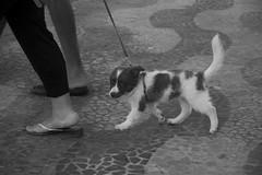 cane (ninnuzzubeddu) Tags: cane lungomare biancoenero soverato