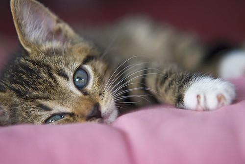 Our new kitten Shetti