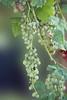 Future wine (Piero Gentili) Tags: gentili piero20051 pierogentili gentilipiero pierpaologentili
