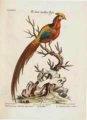 Laminas de aves 1776