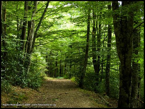 Camino en Monte Hijedo
