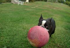 Chet ball