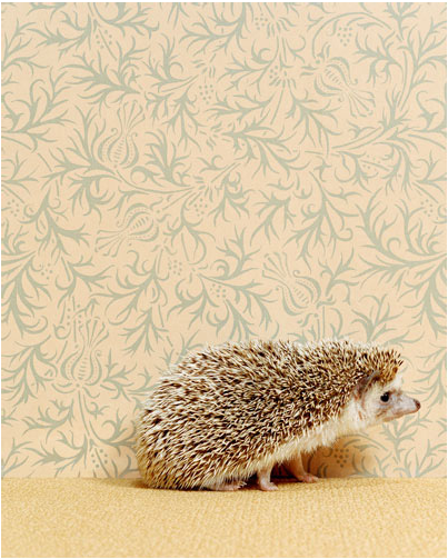 "Catherine Ledner ""Hedgehog"""